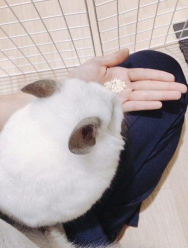 【お迎え22日目】初!プチ部屋んぽデビュー!